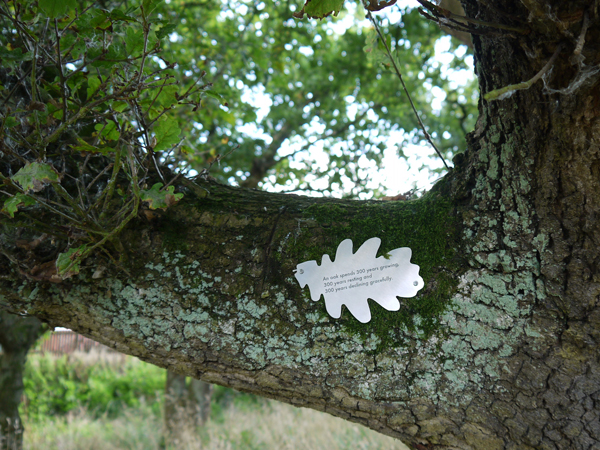 An oak spends 300 years growing, 300 years resting and 300 years declining gracefully.