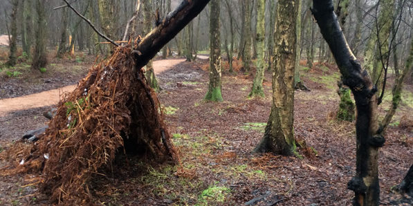 Who was hiding here? (built by visitors to the woodland)
